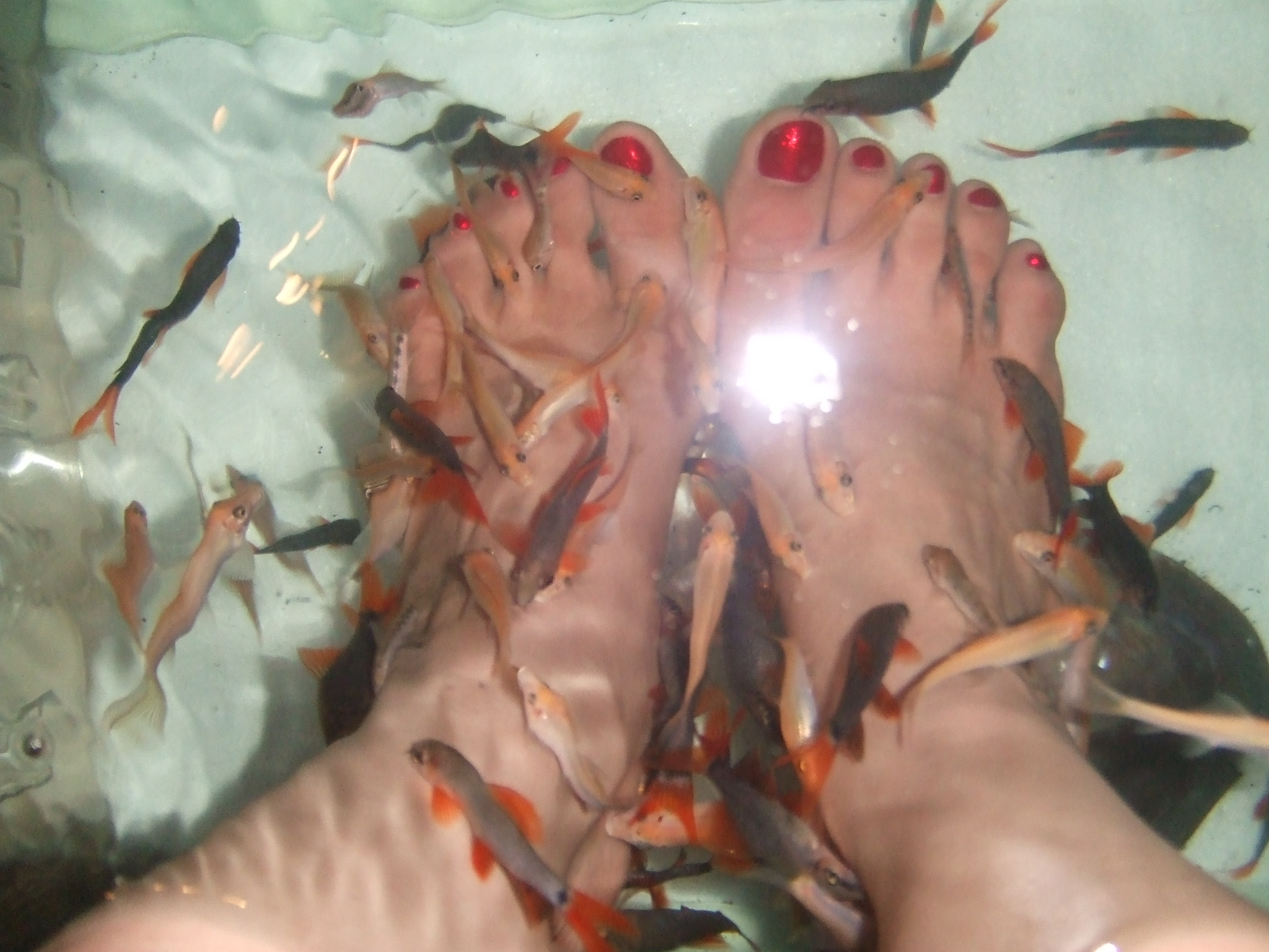 fish eating dead skin off your feet in thailand